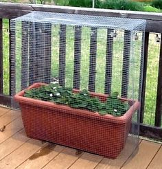 "Cage made with 1/2"" hardware cloth to deter the squirrels and any other animal thief from getting at my strawberries.  Hardware cloth is ideal for making cages, no supports are necessary as it keeps its shape when bent.  You can find hardware cloth at Home Depot or any building supply place - usually in the fencing department."