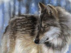 """Daily Paintworks - """"Winter Wolf  12 x 16 pastel on velour paper"""" - Original Fine Art for Sale - © emily Christoff-Flowers"""