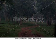 Morning view - inside road in kabini forest
