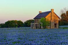 We love Texas!