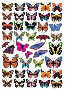Butterfly Clip Art, Butterfly Drawing, Butterfly Pictures, Butterfly Wallpaper, Butterfly Pattern, Vintage Clipart, Korean Painting, Beautiful Butterflies, Art Inspo