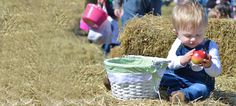 Lyman Orchards - Easter Apple Hunt on April 12, 2014