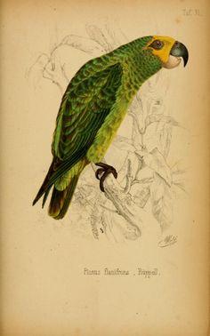 Systematische Uebersicht der Vögel Nord-Ost-Afrikas : - Biodiversity Heritage Library