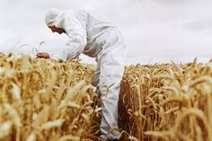 What Exactly Is a GMO—and Why Should You Care?
