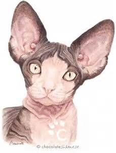 sphynx cat artwork - Yahoo Image Search Results