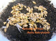 Reilusti itua! #ReiluR #rekry #työ