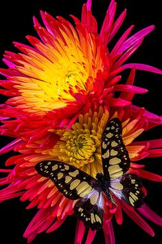 Butterfly On Fire Mum by Garry Gay