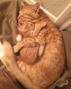This is the true love - your daily dose of funny cats - cute kittens - pet memes - pets in clothes - kitty breeds - sweet animal pictures - perfect photos for cat moms Cute Kittens, Baby Kittens, Cats And Kittens, Kitty Cats, Siamese Cats, Sphynx Cat, I Love Cats, Crazy Cats, Weird Cats