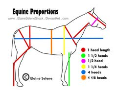 This is just a diagram for general equine anatomy. UPDATED I: I was surprised by how popular this got. So I updated it to make it more accurate. I did trace the horse outline directly from/over a p. Horse Drawings, Animal Drawings, Horse Nail Art, Head Proportions, Horse Outline, Horse Sketch, Horse Anatomy, Horse Care Tips, Horse Artwork