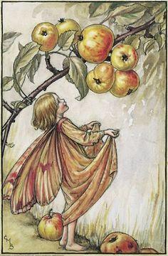 Cicely Mary Barker _ Flower Fairies of the Autumn