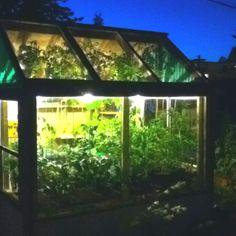 My greenhouse at night