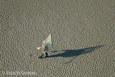 France, Picardie, Somme (80), Baie de Somme, Cayeux-sur-Mer, pêche de la crevette sur la plage (vue aérienne)
