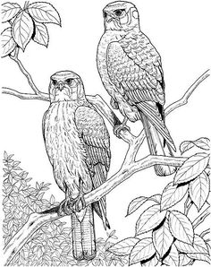 Bird Prints | adult coloring pages printable coupons work at home free coloring ...