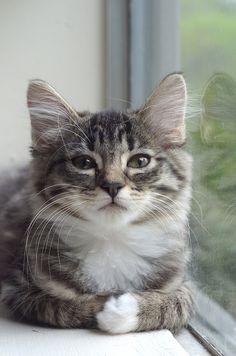 Kitty sittin' pretty :)