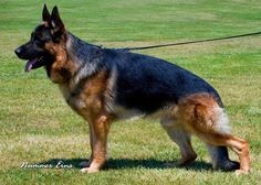 Home of West Coast German Shepherd Dogs - Contact Us