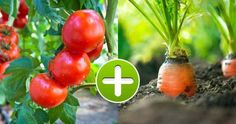 8 Vegetable Pairs That Grow Perfectly Together and 5 Combos to Avoid