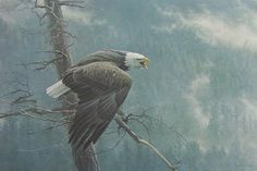 """The Air The Forest and The Watch Bald Eagle"" by Robert Bateman"