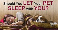 Do you often sleep with your pet? Here are some reasons why you should avoid it, as well as suggestions on how to transition your pet out of your bedroom. http://healthypets.mercola.com/sites/healthypets/archive/2014/09/25/pets-in-the-bedroom-can-harm-your-sleep.aspx