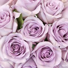 FiftyFlowers Purple Haze Sweetheart Roses are flawless for any centerpiece, bouquet, or ceremony decoration. These sweetheart roses showcase delicate semi- Light Purple Flowers, Purple Haze, Lavender Flowers, Purple Roses, Flowers In Hair, Flowers Garden, Pale Pink, Black Roses, Lotus Flowers