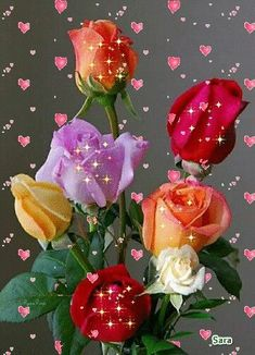 Lavender, Yellow, Orange and Red Roses Beautiful Flowers Wallpapers, Beautiful Rose Flowers, Beautiful Gif, Amazing Flowers, Pretty Flowers, Good Morning Rose Gif, Good Morning Flowers, Happy Birthday Wishes Cards, Flowers Gif