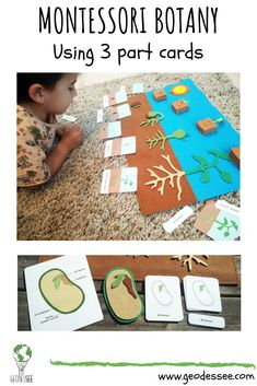 This lesson about seeds and the life cycle of a bean plant invites kids to experiment and ask questions about botany. It's full of fun and educational activities. grundschule Montessori Botany: Seeds and the life cycle of a bean plant Montessori Materials, Montessori Activities, Educational Activities, Seed Activities For Kids, Cycle For Kids, Plant Lessons, Teaching Plants, Planting For Kids, Bean Plant