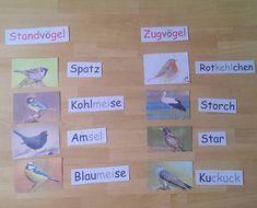 """Gefällt 103 Mal, 9 Kommentare - Lehrerin aus Leidenschaft ✨ (@lehrerfreuden) auf Instagram: """"Heute im Schulgartenunterricht  Wir haben die Vögel benannt, sie den Zug- oder Standvögeln…"""""""