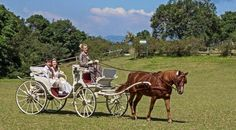 A very beautiful celebration and lovely carriage drive. Celebration, Romantic, Horses, Fantasy, Animals, Beautiful, Animales, Romantic Things, Animaux