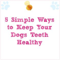 5 Simple Ways to Keep Your Dogs Teeth Healthy