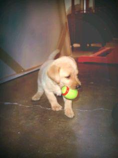 Primer juguete.