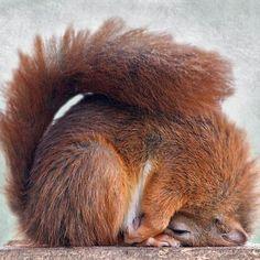 Lustige Tiere mehr auf http://www.fails.ch Now that's just squirrely. LOL -