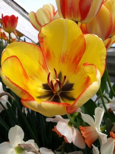 Flowers by:Missy Ashton