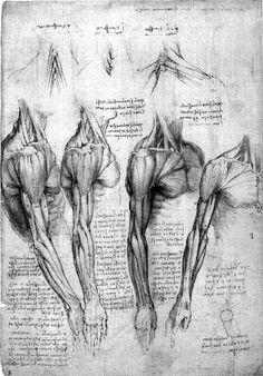 shoulder drawings | Leonardo da Vinci: Anatomist (exhibition review) #2 | Propagandum