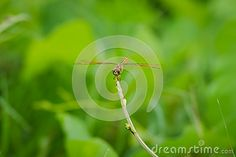 Dragonfly on a tree top with blurry green background