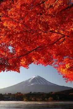 ['Monte Fuji y Arce' • Foto de Fumitaket | Monte Fuji con hojas de arce japonés en rojo. Lago Kawaguchi (Prefectura de Yamanashi, Japón). | El autor dice: Fue impresionante ver cómo las hojas comenzaron a mostrar sus brillantes colores de otoño con la ayuda de la luz del sol de la mañana. (foto vertical; IMG_1765_DPP)] » 'Mt. Fuji and Maple' (vertical shot) | Mt. Fuji with Japanese maple leaves in red. Lake Kawaguchi.