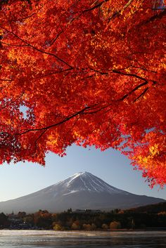 Mt. Fuji with Japanese maple leaves in red. Lake Kawaguchi. It was a stunning view how the leaves started to show their bright autumn colors with the help of morning sunlight.