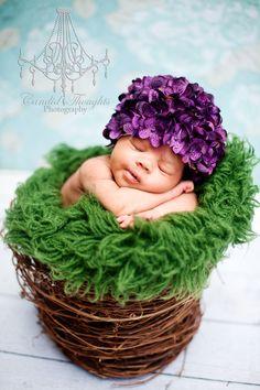 Sweet little hydrangea! :)