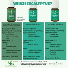 Young Living Eucalyptus