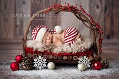 Newborn in Twig Bed - Christmas Photo Session - Christmas Newborn Session - Christmas Photos - Christmas Newborn - Holiday Portraits - Newborn Photography - Newborn Photographer - Holiday Newborn Session - Christmas Card Photos. Newborn Baby Photos, Newborn Shoot, Newborn Baby Photography, Newborn Pictures, Baby Newborn, Infant Pictures, Newborn Photo Outfits, Children Photography, Baby Baby