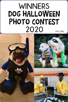 Here are the 10 winners of this year's Dog Halloween Photo Contest along with their prize packs. Dog Halloween Costumes, Halloween Photos, Dog Costumes, Dog Ear Wash, Pennywise The Clown, Photo Contest, Dog Mom, I Love Dogs, Proverbs