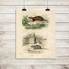 INSTANT DOWNLOAD Antique Print Mice and by BackAlleysBackRoads
