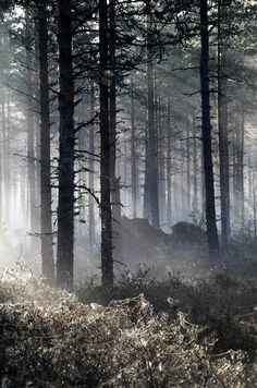 When Light Finds it's Way into the Elven forestbyPetri Volanenon 500px○ 3285✱4959px-rating:92.3☀Photographer:Petri Volanen,Forssa,Finland