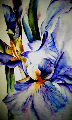 Watercolor Iris  by Mingming Peng