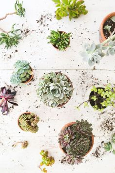 succulents. i never get tired of looking at them. via the Slowpoke