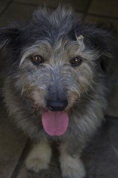 ACE Animal Care España - De refugio bezoeken Animal Care, Doge, Pet Care, Charity, Animals, Shelters, Animaux, Animal, Animales