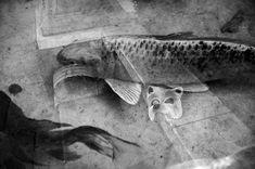 """Eu vi um peixe voando! Eu vi! Ele me disse, na pressa do seu vôo: venha! E eu fui. Eu fui embora deste mundo. Obra """"Inconsciente"""" por Carol Rahal"""