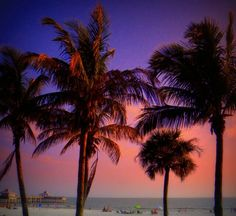 Florida Gulf Coast Florida Palm Trees, Palm Tree Sunset, Palm Trees Beach, Fort Myers Beach Hotels, Beach Resorts, Florida Vacation, Vacation Spots, Boat Pics, Sanibel Island