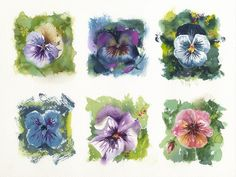 Jake Marshall watercolors of pansies. My plan was to put these pansy studies in small frames, but I think I'll leave the watercolor intact and frame it as a group, loose edges and all.