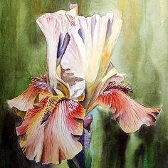 paintings of iris flowers - Yahoo Image Search Results Watercolor Disney, Watercolor Flowers, Watercolor Paintings, Watercolors, Floral Paintings, Iris Art, Iris Painting, Creation Photo, Iris Flowers