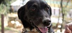 Dicas de primeiros socorros para cachorros  Envenenamentos? Queimaduras? Atropelamentos? Confira alguns cuidados simples, que você pode fazer em casa, antes de levar seu animal ao veterinário