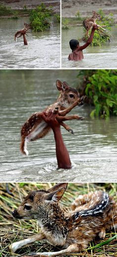 Heroic Boy Risks His Life To Save A Drowning Baby Deer From Floodwaters In Bangladesh